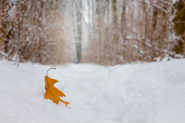 森の雪の中で乾燥したオークの葉