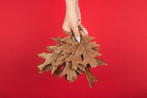 Dry oak leaves in hand on a red background
