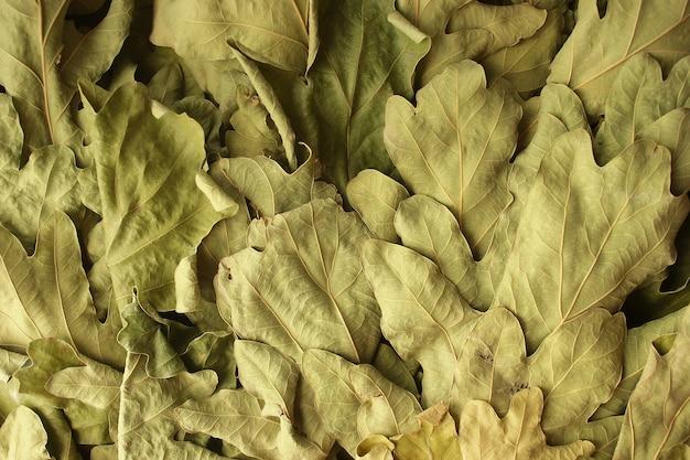 마른 오크 잎 가로 배경