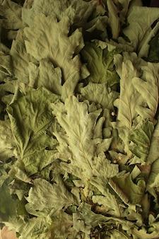 마른 오크 잎 세로 배경