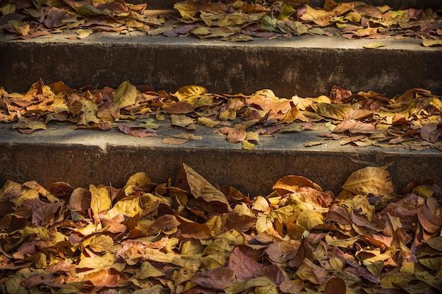 Сухие старые листья на бетонной лестнице