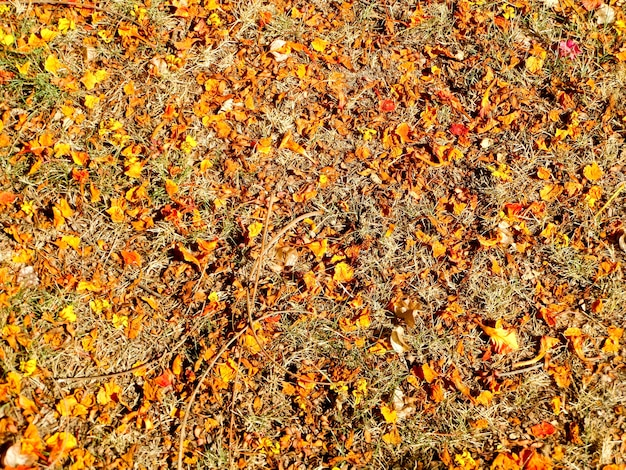 Dry orange and red leaves has fall on floor cause high temperature