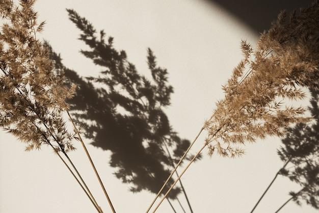 마른 팜파스 풀 리드. 벽에 그림자. 태양 빛에 실루엣입니다. 최소한의 실내 장식 개념.
