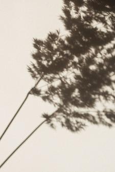 벽에 마른 팜파스 잔디 리드 그림자. 태양 빛의 실루엣