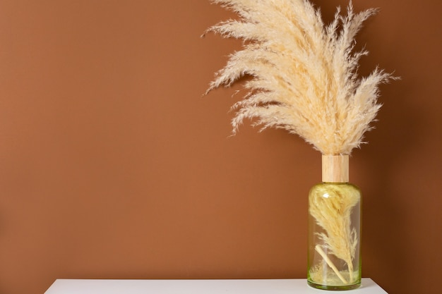 Dry pampas grass reeds in vase on brown orange background.