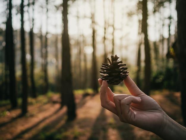 Dry pinecone