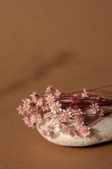 밝은 갈색 배경에 어두운 그림자와 분홍색 꽃과 돌을 건조. 추세, 최소한의 개념 수직 측면보기