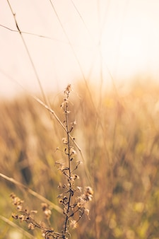 Dry plant in front of blurred background