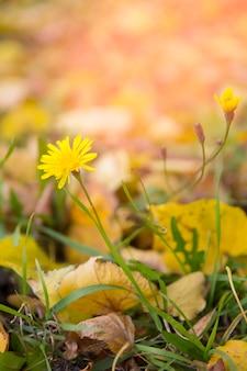 秋の草原の乾燥した植物