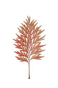Dry red leaf like a pine tree branch isolated