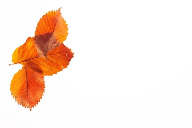 흰색 바탕에 마른 붉은 잎