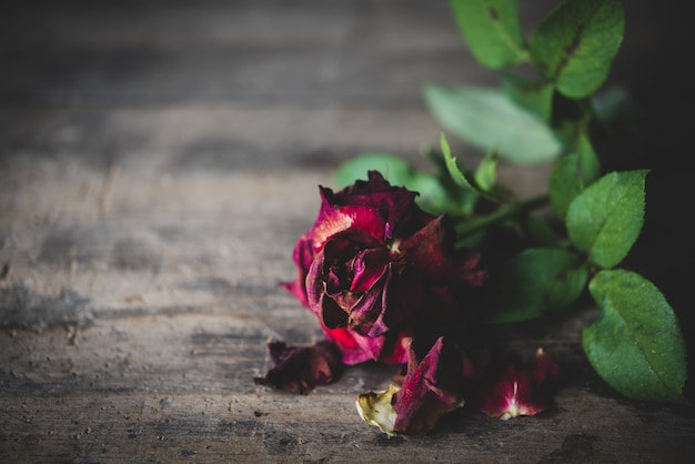 Dry red  roses on grunge wooden background