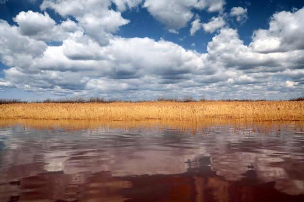 深い湖で乾燥した葦