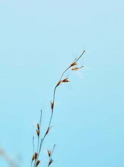 乾燥した葦、葦の種。青い空を背景に太陽の下で黄金の葦草。ミニマルでスタイリッシュ、トレンディなコンセプト。