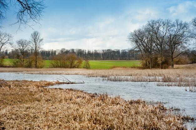저수지 기슭의 마른 갈대와 겨울 밀과 나무의 푸른 들판. 이른 봄, 광각.