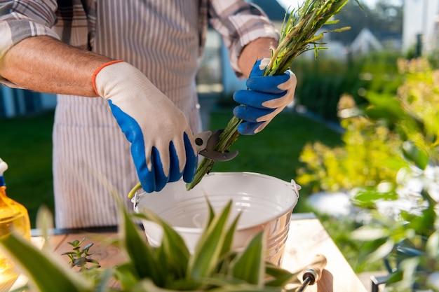 乾燥した根。ガーデニングが好きな間、縞模様のエプロンと手袋を着用して花の乾いた根を切り落とす男