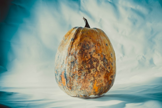 Dry and rotten and dried pumpkin on a bluewhite background spoiled vegetable dangerous food