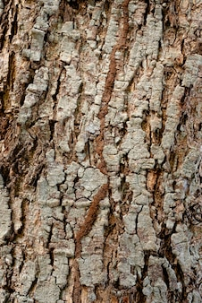 乾燥した素朴な木の樹皮のテクスチャー、背景のグラフィックリソースの使用。