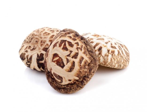 Dry shiitake mushroom isolated