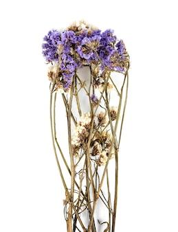 흰색 배경에 고립 된 마른 statice 꽃