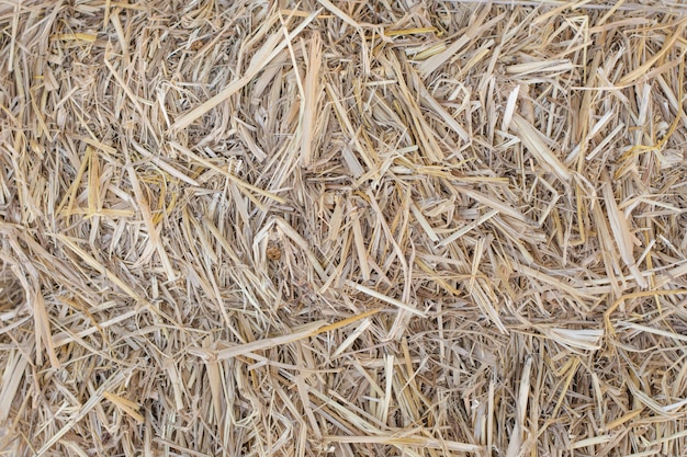 Dry straw closeup for background and textured.