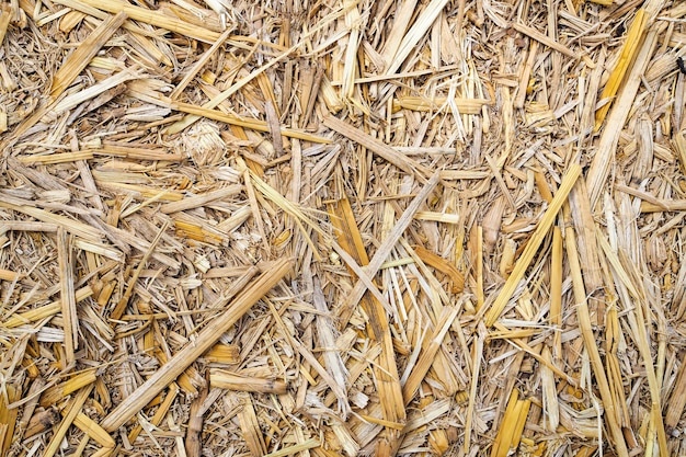 Dry straw texture nature background. top view