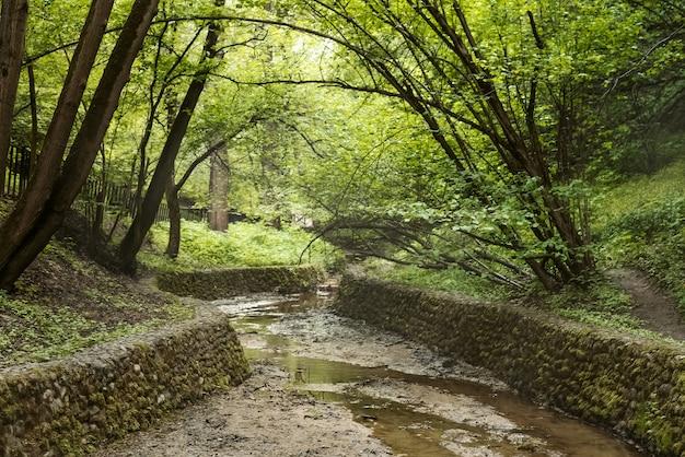 나무 사이 여름 공원에 돌이 늘어선 은행이있는 마른 시내