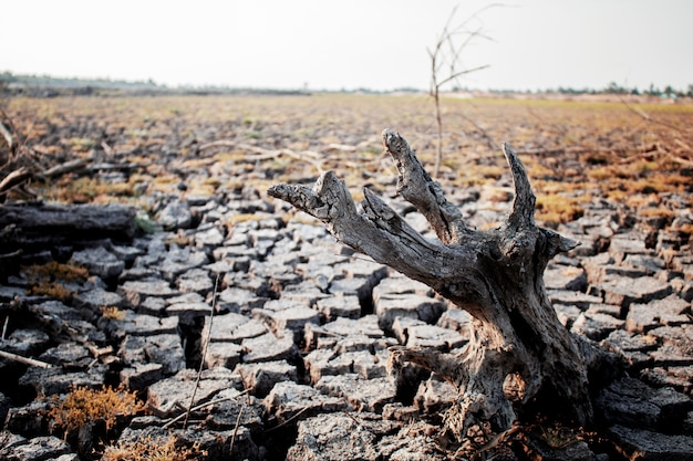 Dry stumps on cracked ground.