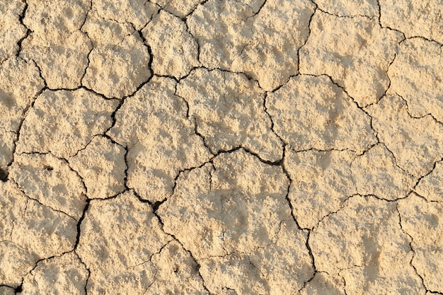 Dry surface of the ground.