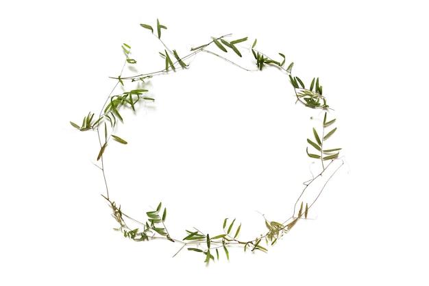 Сухие тонкие стебли дикого горошка лежат в форме круглой рамки. элемент зеленого дизайна.