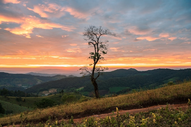 Dry tree on agricultural hill in countryside at sunrise