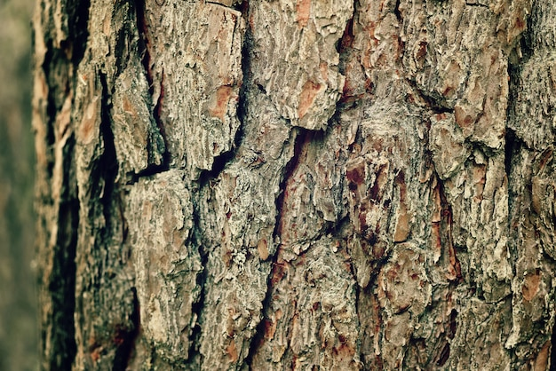 Dry tree bark background. abstract wooden texture