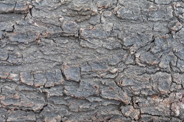 乾燥した木の樹皮幹テクスチャ背景を閉じる