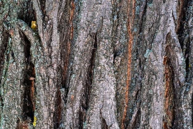 Сухая кора дерева с трещинами и мхом