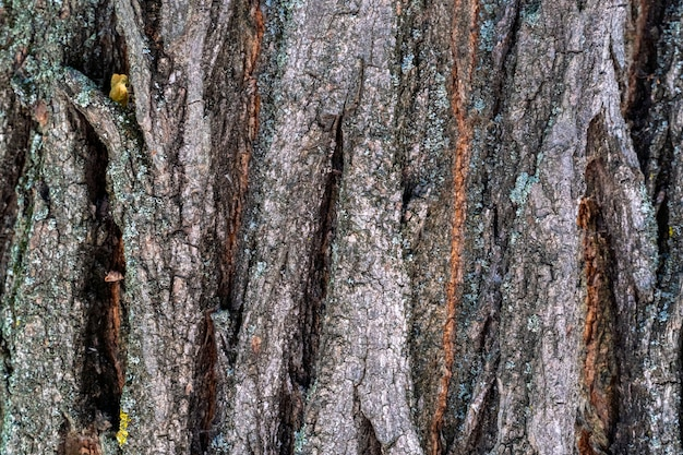 Dry tree bark with cracks and moss