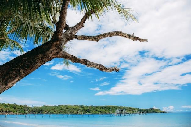 Dry tree on beach at sky.