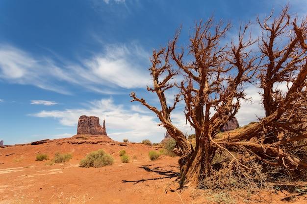 モニュメントバレーの砂漠の乾いた木