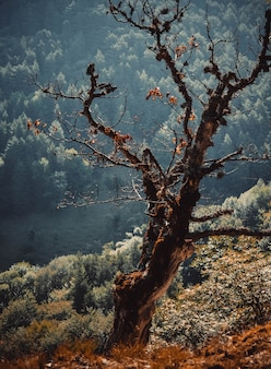 Сухое дерево в лесу и с перспективой и фильтром
