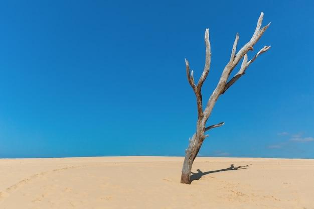 Сухое дерево в песчаных дюнах на фоне неба