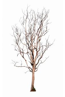 마른 나무 흰색 배경에 고립입니다. 고립 된 나무입니다.