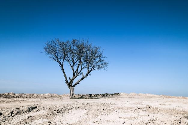砂の地面、青い空に乾燥した木