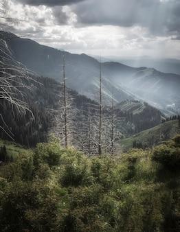 アルマトイ市カザフスタンの近くの明るい晴れた日の山の風景の乾燥した木の幹