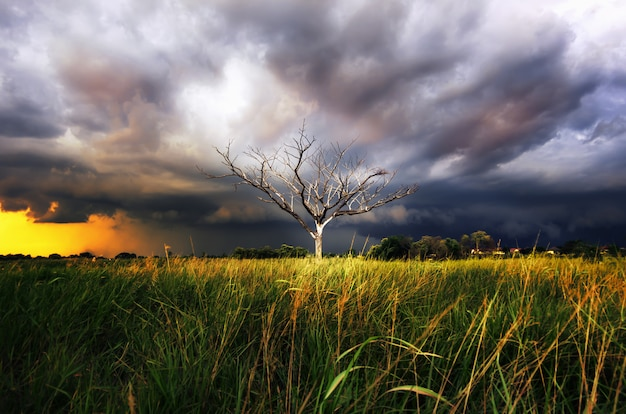 Dry tree with storm