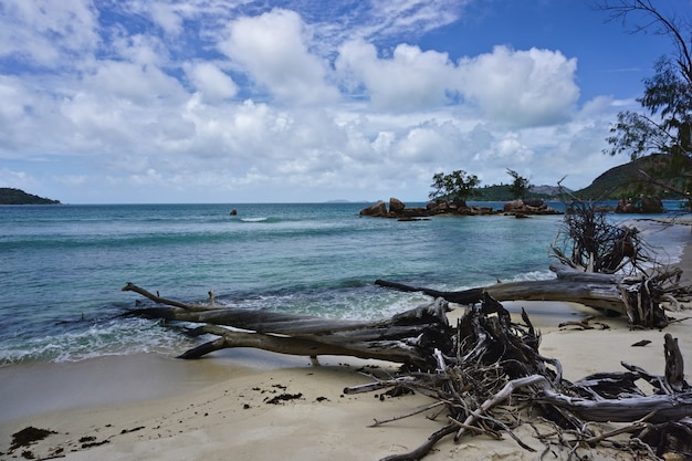Dry trees on white sand beach at seychelles islands, africa.