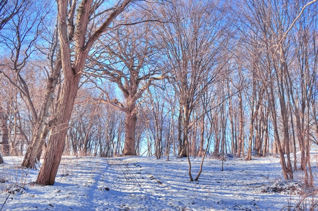 Dry trees with snow