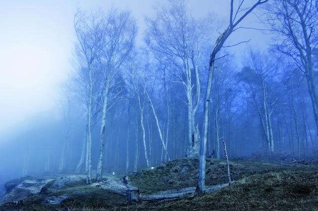 마른 나무