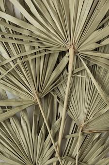 白地に乾燥した熱帯のエキゾチックなヤシの葉