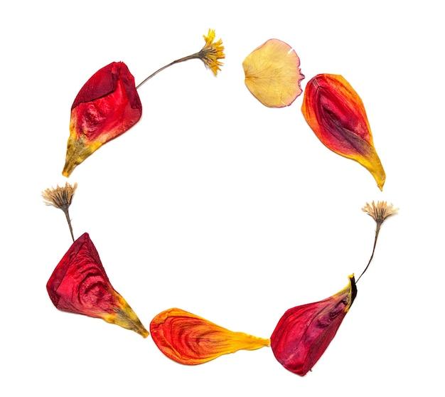 乾燥したチューリップの花びらが折り返されています。自然なデザインのための空白