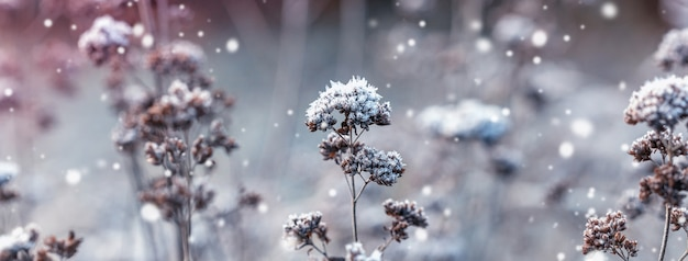 ふわふわの雪に覆われた乾燥した小枝。冬の風景。白い雪とクリスマスの背景。冬の森の日光。