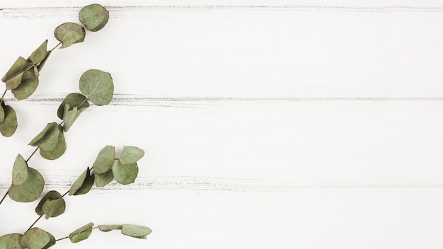 Сухие ветки на белом деревянном фоне